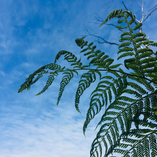 Iphone6 Sky Plant Low Angle View Nature No People Growth Tree Leaf