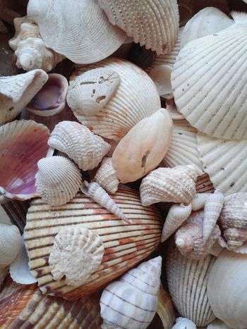 Seashell❤ Seashells Seashell Seashell, By The Sea Shore Seashell Collection Seashells From The Seashore Seashell Hunt Seashell Close-up Seashellsearching SHELLS!! Shells Annamariaisland