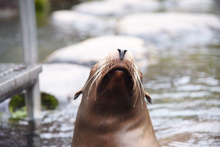 Close-up of seal in lake