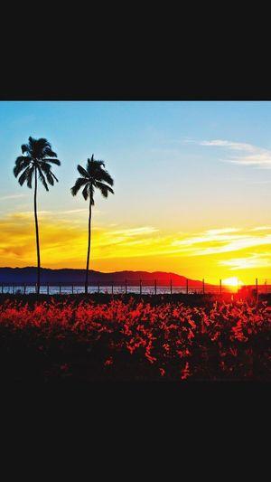 Puerto Vallarta Sunset Vallarta,Mexico sunset, puerto vallarta, palm trees, golden hour, sunset time,