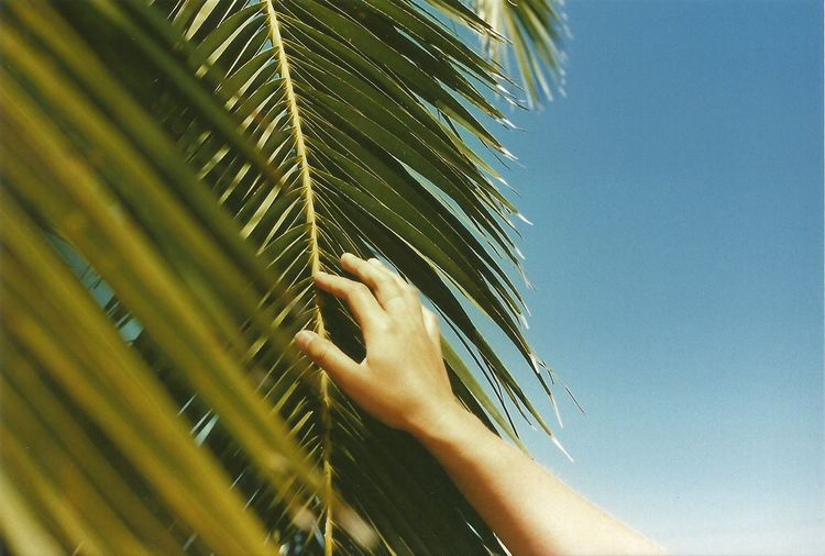 Cropped hand touching palm leaf