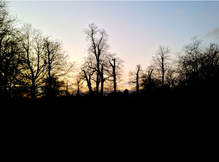 EyeEm LOST IN London Bare Tree Beauty In Nature Day Landscape Nature No People Outdoors Scenics Silhouette Sky Tranquil Scene Tranquility Tree