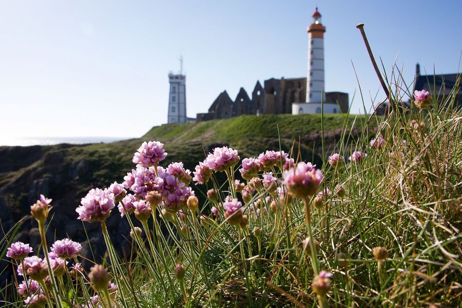 Pointe Saint-Mathieu Architecture Blue Brittany Built Structure Day The Great Outdoors – 2016 EyeEm Awards Flower Grass Landscape Nature No People Outdoors Plant Saint-Mathieu Lighthouse Sky The Great Outdoors The Great Outdoors - 2016 EyeEm Awards Tourism Travel Destinations Beauty In Nature Blooming Blossom Focus On Foreground Nature_collection Pink Flower