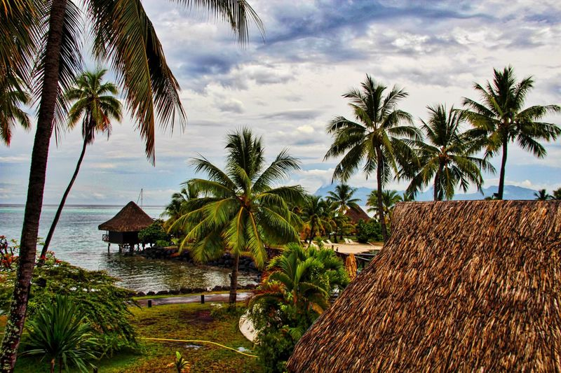 Papeete Seaside Bungalows Tree Sky Plant Cloud - Sky Palm Tree Tropical Climate Water Nature Beauty In Nature Growth Architecture Tranquility Tranquil Scene Built Structure Scenics - Nature Thatched Roof Beach Roof No People Outdoors
