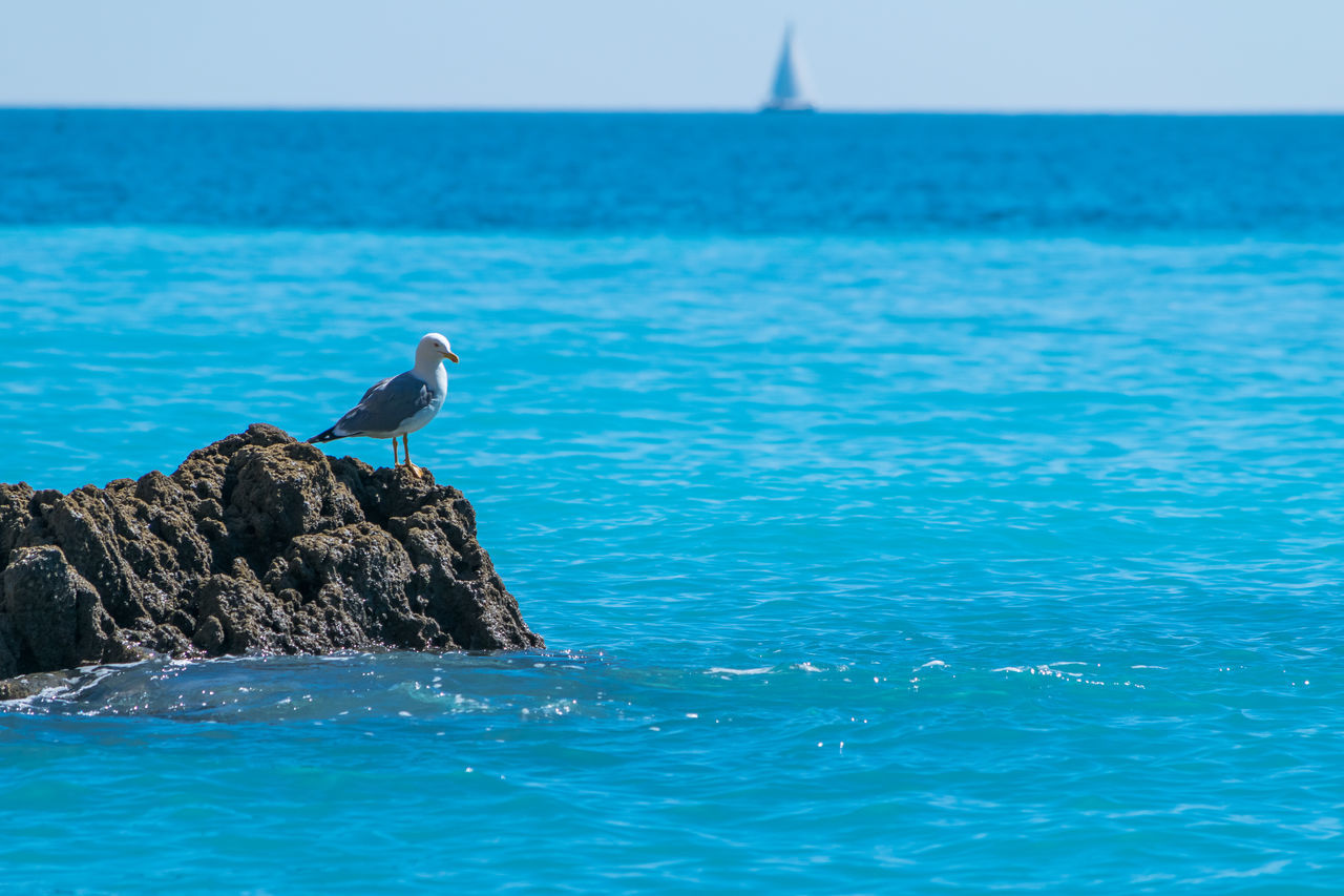 bird, animals in the wild, sea, water, perching, one animal, animal themes, animal wildlife, nature, beauty in nature, waterfront, day, outdoors, no people, horizon over water, scenics, sky