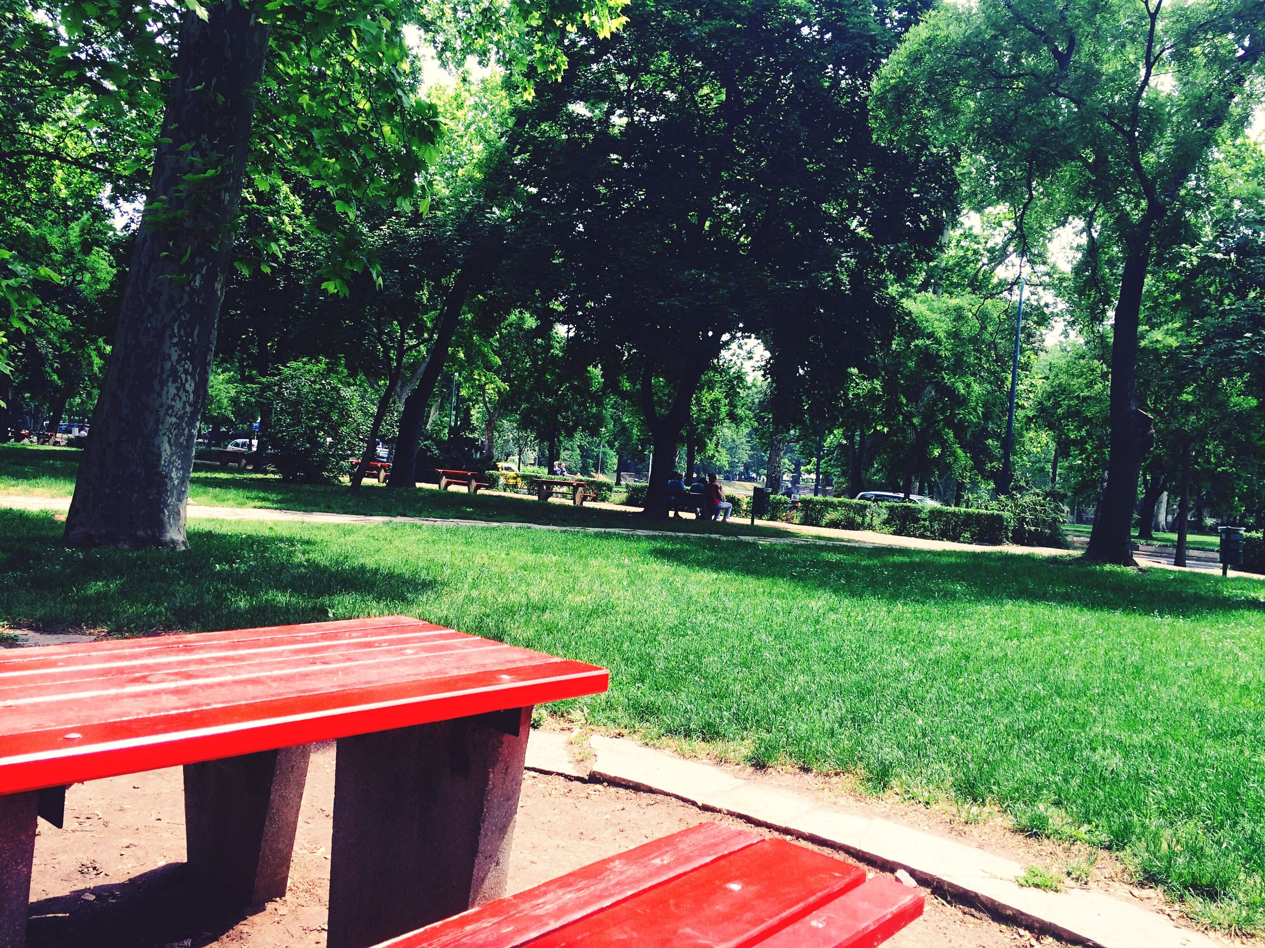 tree, grass, park - man made space, green color, growth, bench, park, lawn, tranquility, nature, red, sunlight, empty, beauty in nature, tranquil scene, day, park bench, absence, garden, shadow
