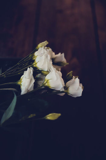 Close-up of white roses against black background
