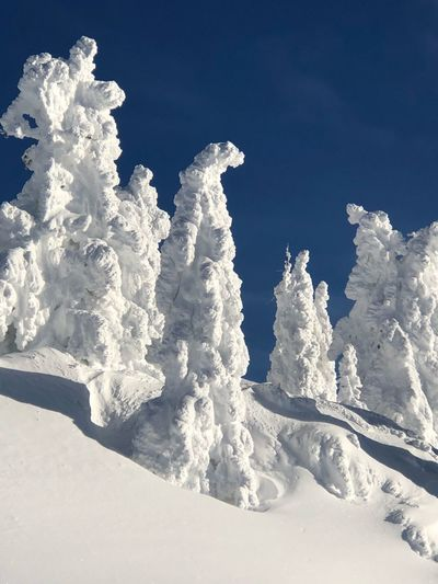Bischof Tree Blue Skies Snowcoveredtrees Alpine Sun After Snowstorm Snowcovered Winterwonderland Lonely Place  Winter Snow Cold Temperature Sky Nature Beauty In Nature White Color Scenics - Nature Day Sunlight Frozen Clear Sky Powder Snow Tranquil Scene
