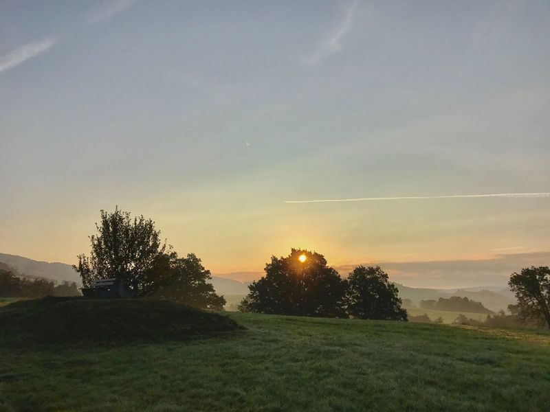 Tranquility Sunset Nature Landscape Field Beauty In Nature Tree Tranquil Scene Scenics Idyllic Grass Sky No People Outdoors Growth Rural Scene Day ...... Onmywaytowork EyeEm Nature Lover Blackforest Morning