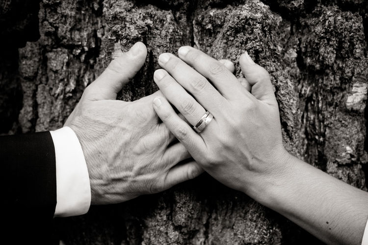 Close-up of couple hands on tree trunk