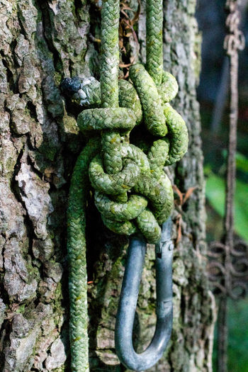 Macro Photography Musk Nature Rope Tree Close-up Day Focus On Foreground Green Color Macro Moss No People Outdoor Photography Outdoors Strength Wooden