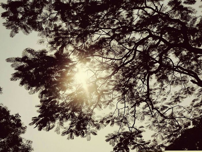 Beautiful Evening Tree And Sun Shade Beautiful Nature Raodtrip Branches Dark And Light Sunshine Sun sunset #sun #clouds #skylovers #sky #nature #beautifulinnature #naturalbeauty photography landscape Fine Art Sunlight Sunny Day Sun ☀