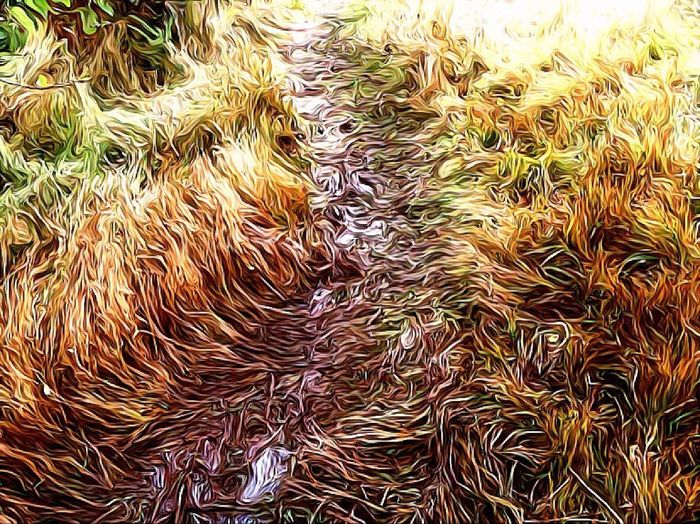 Oil Painting Effect Troddenpath Grassy Wet Ground