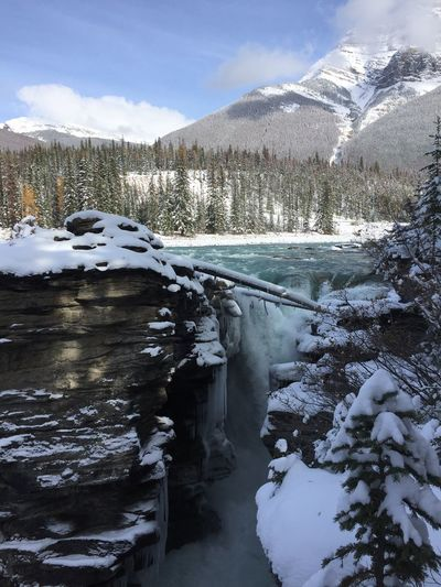 Waterfall Athabasca Falls Canadian Rockies  Canada Athabasca River Winter Snow Cold Temperature Scenics - Nature Water Sky Cloud - Sky Mountain Beauty In Nature Nature Day Tranquil Scene Tranquility No People Non-urban Scene Plant Frozen Tree Outdoors Snowcapped Mountain