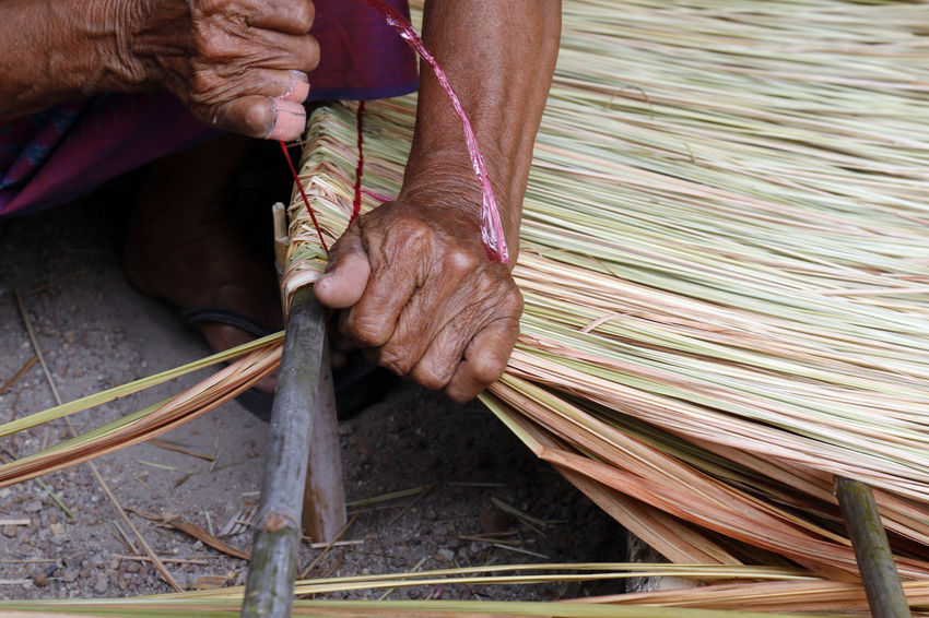picture shows how to make a panel vetiver for hut roof, handwork crafts of panel vetiver for hut roof, straw roof hut Panel Adult Body Part Close-up Day Finger Hand Holding Human Body Part Human Foot Human Hand Hut Roof Hut Roof House Industry Low Section Men Occupation One Person Outdoors Panel Vetiver Real People Skill  Vetiver Weaving Working