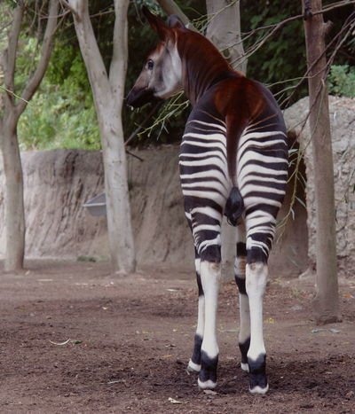 #animal #France #stripes #travel #zoo Nature's Diversities
