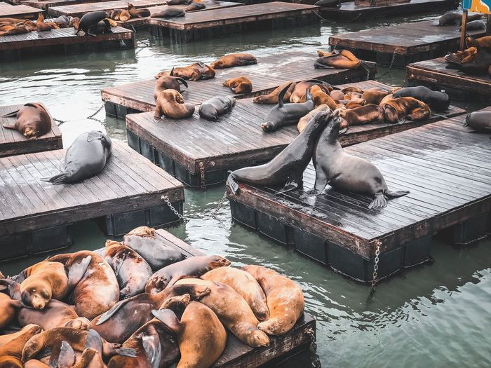 High angle view of seals relaxing on floating platforms over sea