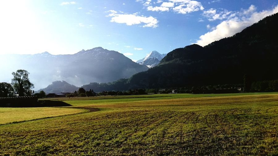 morning stroll Bernese Oberland Switzerland Eye4photography  Sunlight Light Interlaken Berner Oberland EyeEm Selects Mountain Flower Tree Agriculture Rural Scene Field Sky Landscape Mountain Range Snowcapped Mountain Mountain Peak
