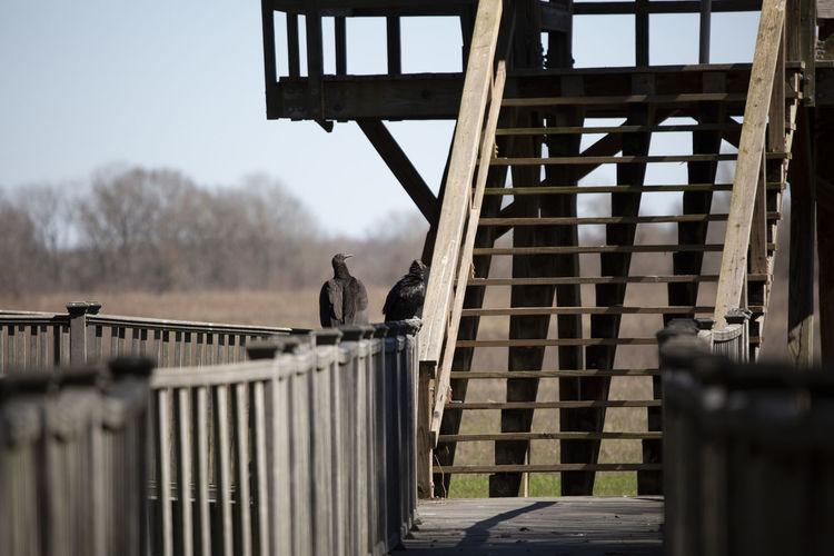 View of bird perching on railing