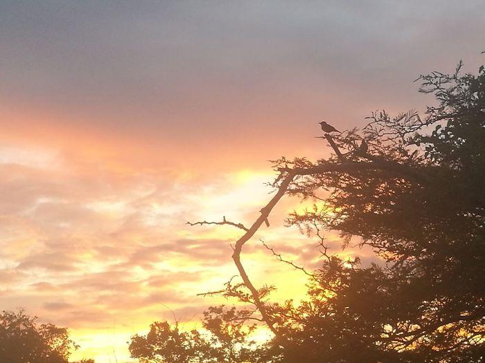 Atardecer Tree Sunset Forest Mountain Silhouette Sunlight Branch Rural Scene Beauty Environment