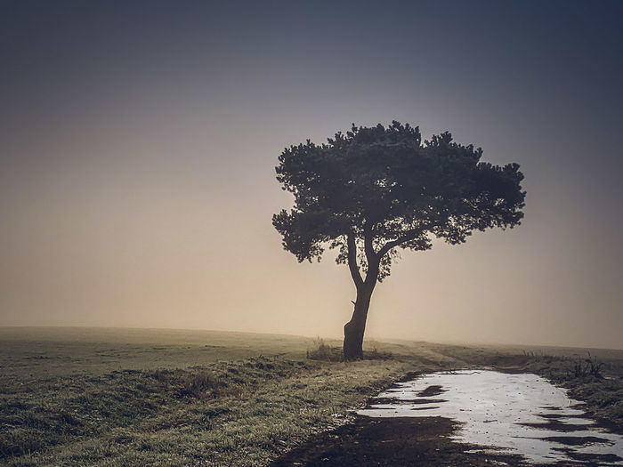 Tree Plant Environment Nature Tranquility Sky Land Beauty In Nature Landscape No People Tranquil Scene Fog Single Tree Outdoors Scenics - Nature Grass Non-urban Scene Frozen Snow Early Morning Winter Morning Sun Behind Fog Fields