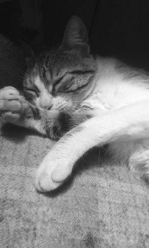 ● One Animal Cat Day Sleep EyeEmNewHere ●