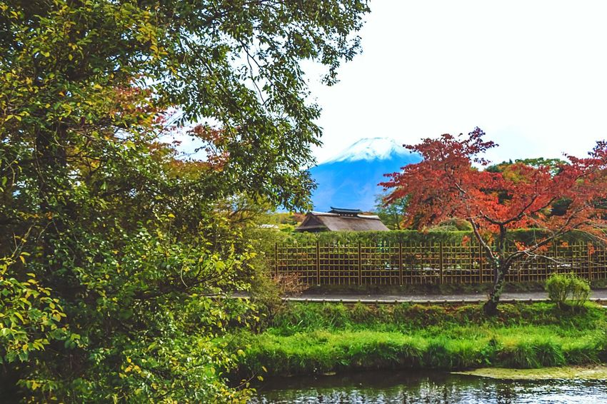 A Series Of Fuji Mountain's Picture -15 Autumn Fujimountain Mt.Fuji Colors Of Autumn Mountain View EyeEm Best Edits Eye Em Nature Lover Fuji Mountain Beautiful Nature Natural Beauty