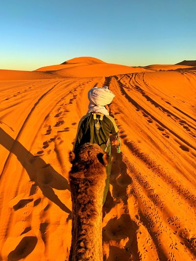 Rear view of man with camel walking in dessert against clear sky during sunset