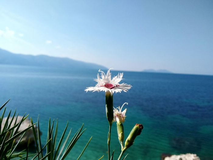 Close-up of flowers against sea
