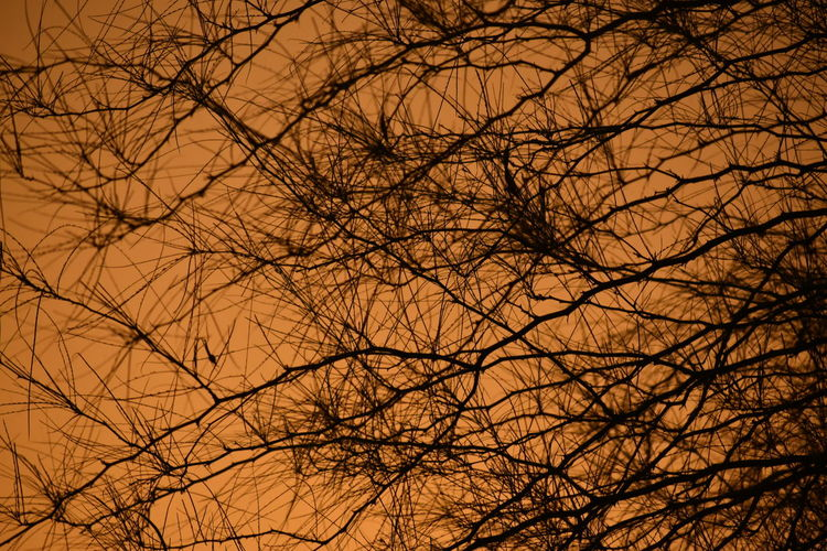 Low angle view of bare tree at sunset