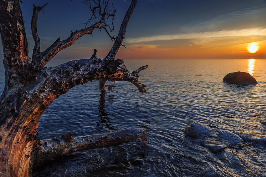 Water No People Horizon Over Water Branch Sky Beauty In Nature Day Beach Outdoors Sunrise Sunrise_sunsets_aroundworld Colours Brodtener Ufer Baum Tree Structure Struktur Wood - Material Holz Scenics Nature EyeEm Nature Lover Nature Photography EyeEm Gallery EyeEm Best Shots