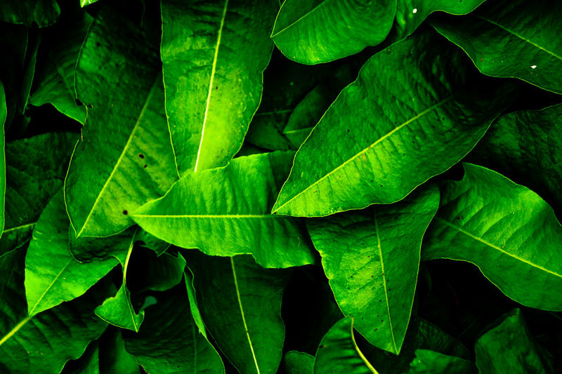 Backgrounds Beauty In Nature Close-up Day Fragility Freshness Full Frame Green Color Growth Leaf Nature No People Outdoors Plant The Still Life Photographer - 2018 EyeEm Awards