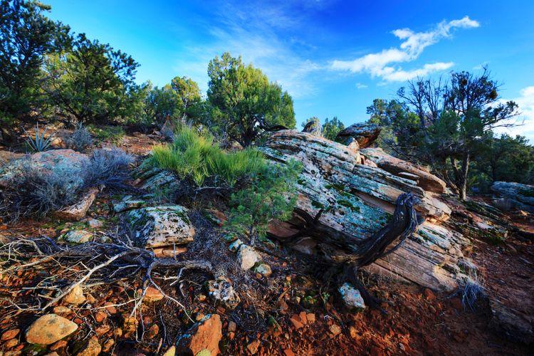 desert landscape Landscape Rock Desert Desert Beauty Utah Utah Scenery Tree Sky