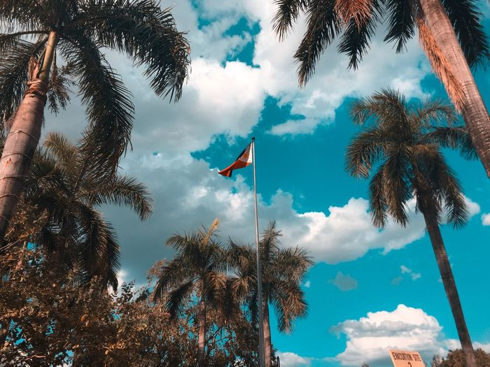 Palm Tree Lightroom Philippines Sky Tree Low Angle View Plant Cloud - Sky Flag Nature Day The Mobile Photographer - 2019 EyeEm Awards