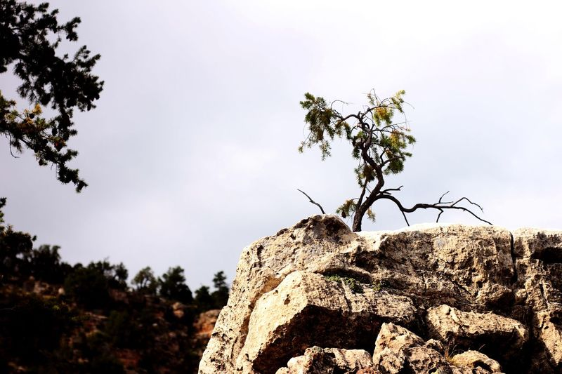 Resilient juniper tree growing on top of eroded rocks Reslience Juniper Tree Plant Sky Tree Growth Nature Low Angle View Beauty In Nature No People Tranquility Day Outdoors Cloud - Sky Branch Plant Part Leaf Fragility Vulnerability  Freshness