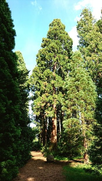Tree Nature Growth Outdoors Green Color No People Beauty In Nature Tree_collection  Trees And Sky Tree Area Tree Art Treecollection