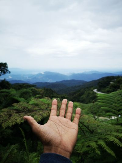 Cropped hand over plants against mountains