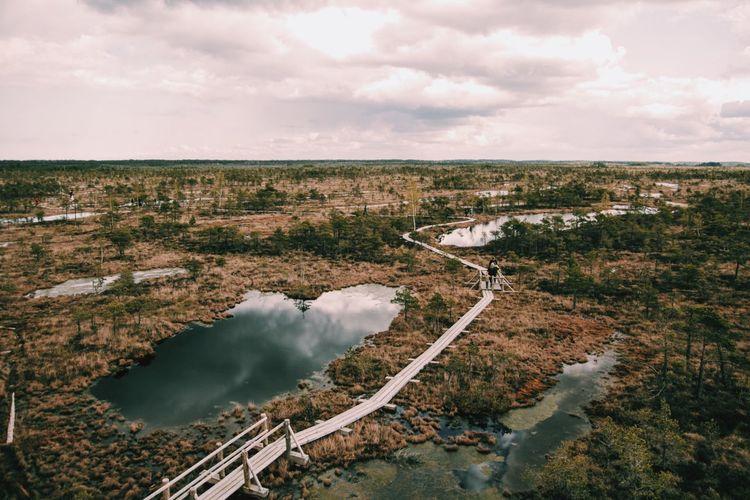 Swamp Latvia