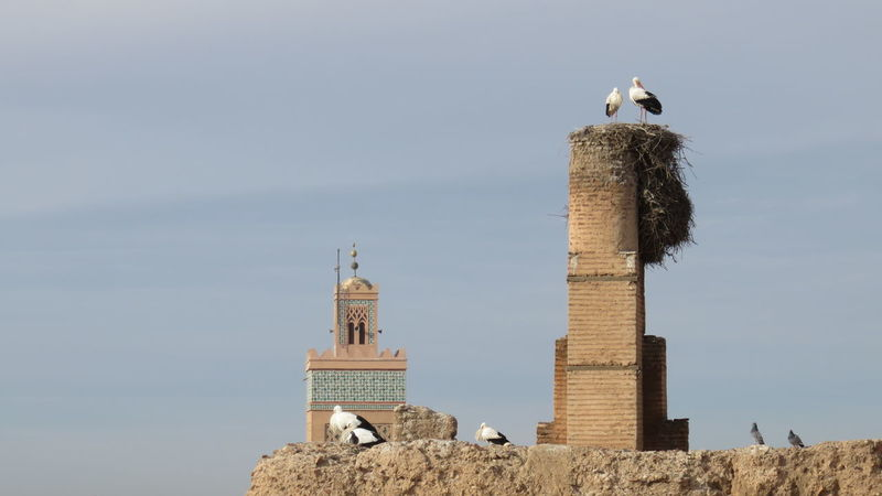 storks in Marrakech Animal Themes Architecture Bird City Life Day Morocco Mosque No People Outdoors Storks Wall Wall - Building Feature Walls