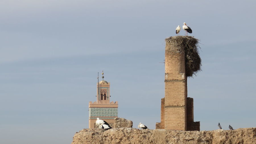 Birds perching on built structure with mosque in background against sky