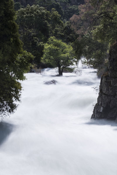 This small tree rooted in the middle of a raging river remains fixed and unwavering amid all the turbulence. Beauty In Nature Day Flowing Water Forest Long Exposure Motion Nature No People Outdoors Scenics Tranquil Scene Tranquility Tree Water Waterfall