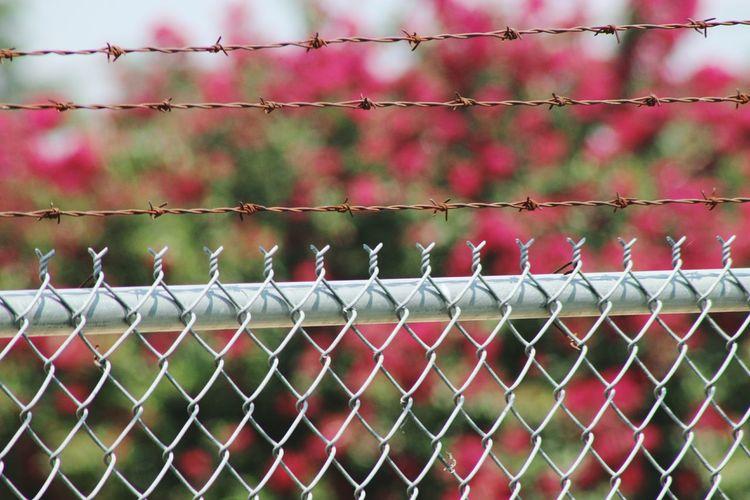 Detail Shot Of Fence Against Blurred Plants