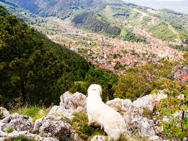 Let's sit for a while and admire the view! #Adventure #goldenretriever #hiking #landscape #naturalbeauty #outdoor #trekking #travelling #sightseeing Animal Themes Animals In The Wild Beauty In Nature Bird Day Domestic Animals Landscape Mammal Mountain Mountain Range Nature No People One Animal Outdoors Pets Rock - Object Scenics Tree