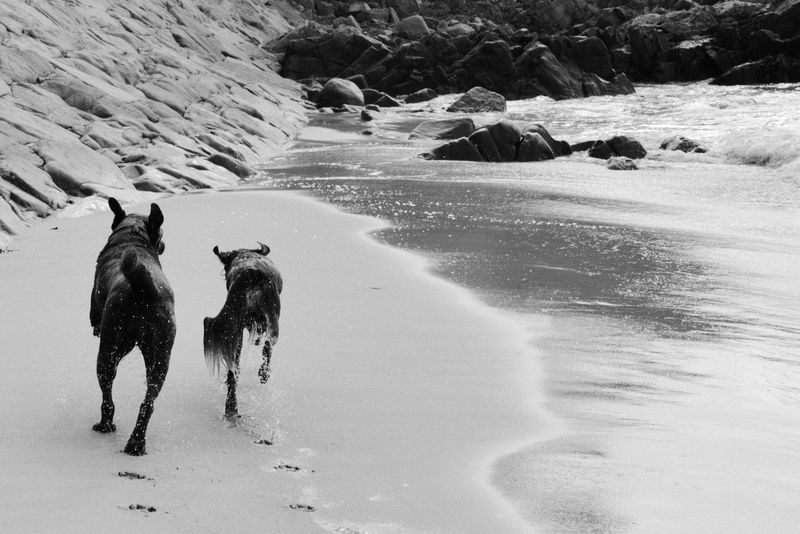 Best of friends Pet Portraits Animal Themes Beach Beauty In Nature Dog Domestic Animals Nature Outdoors Pets Rear View Sand Scenics Togetherness Water