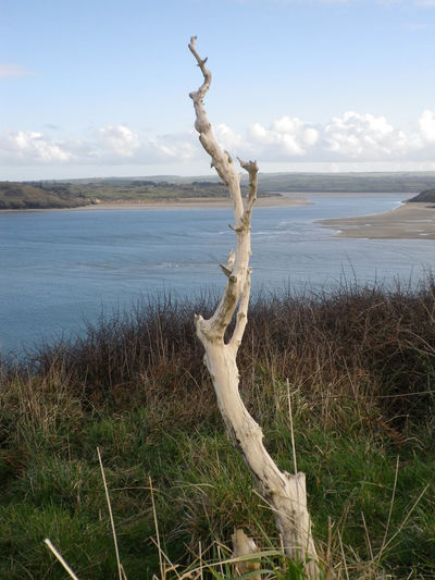 Weathered and bleached dead tree trunk overlooking the River Camel estuary near Padstow in North Cornwall, SW England, UK - Taken from the coastal path in February. Coastline Coastline Landscape Dead Tree Hiking River Camel Coast Cornwall Cornwall Uk Daymer Bay Dead Plant Dead Trees Driftwood Estuary Hiking Adventures Hiking Trail Hiking_walking Hikingadventures Hikingphotography Non-urban Scene Sea Tranquil Scene Tranquility Walking Water Weathered Wood