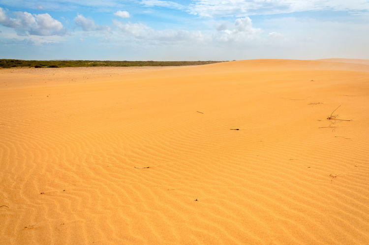 View of dry sandy desert in La Guajira, Colombia America Arid Colombia Country Countryside Desolate Dry Earth Environment Ground Guajira Horizon Hot Isolated Land Landscape Natural Nature Outdoors Sand Scene South Summer Travel Waterless
