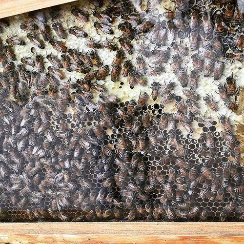 Queenbees Relax TBT  Turin Instaapi Instabees Ig_api Ig_bees Photographer Photooftheday Picoftheday Api Alveare Lavoroduro Bees Beeshome Honey Salviamoleapi Ilfuturosonoloro