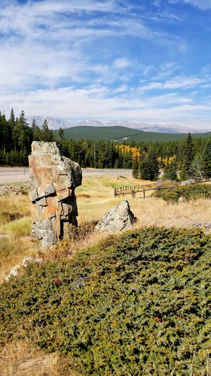 Fall colors beginning to show Green Color Yellow Color Pine Trees West Of Buffalo Wyoming Tall Boulder Sunlight Shadows Rural Scene Sky Landscape Cloud - Sky Fence