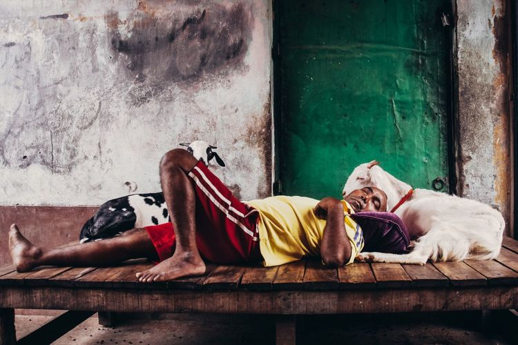 India Sleeping Incredible India Streetphotography Street Goat Outdoors Colors Colorful Eye4photography  Documentary City EyeEm Best Shots Check This Out Travel Photography VSCO Urban Journey Urbanphotography Kolkata ASIA Vscocam This Week On Eyeem