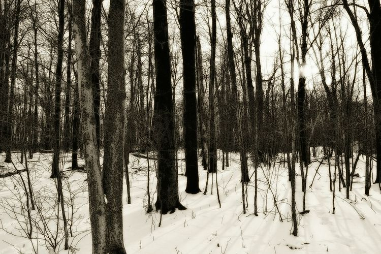 Shades Of Grey Snowy Forest Forest Twilight Shades Of Winter